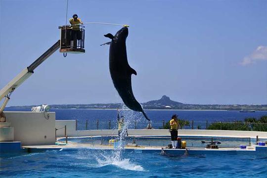 沖縄美ら海水族館 オキちゃん劇場